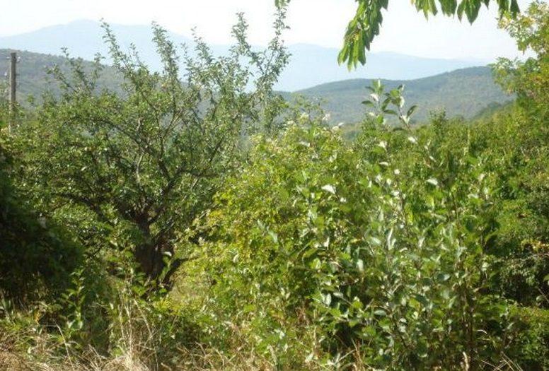 Immobilier bunovo kyustendil bulgarie maison 60m2 for Jardin 60m2