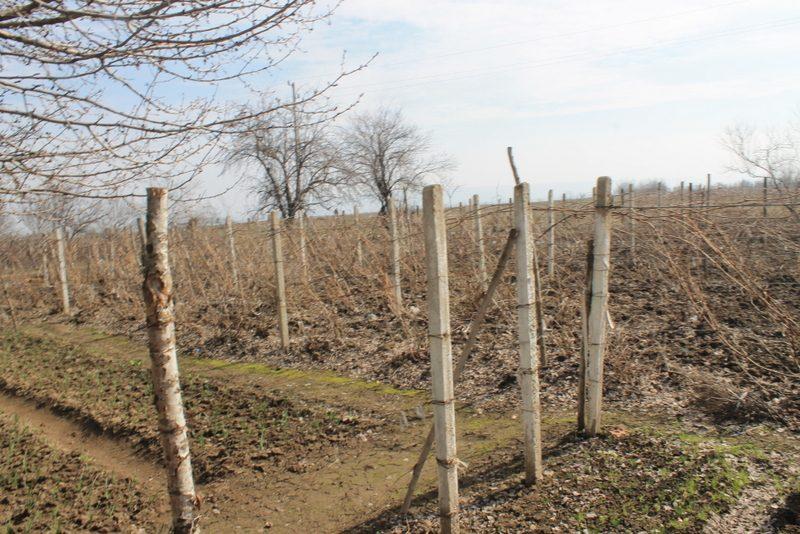 Immobilien haus in stanevo montana bulgarien 1300 qm for 300 qm garten gestalten